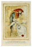 Coco, il pappagallo Stampe di Pascal Cessou