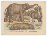 Animaux d'Afrique, Elephant Prints