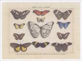 Papillons I Prints by Pascal Cessou