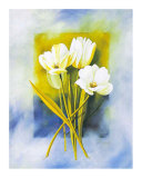 White Narcissus Posters by Franz Heigl