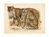 Animaux d'Afrique, Tigre Prints