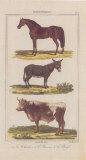 Cheval Prints