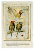 Les Perroquets Flamboyants Stampe di Pascal Cessou