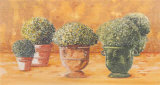 Pots et Buis II Prints by Laurence David