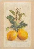 2 Citrons Affiches par Laurence David
