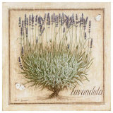 Lavandula Print by Vincent Jeannerot