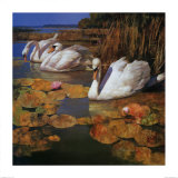 The Swans Family II Prints by Spartaco Lombardo