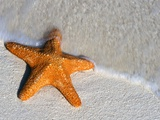 Starfish on Shore Photographic Print