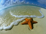 Starfish on Edge of Shore Photographic Print