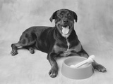 Dog Lying by Bowl Photographic Print by Lawrence Manning