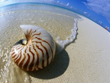 Seashell Resting on Shore Photographic Print by Leslie Richard Jacobs