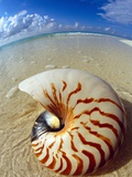 Seashell Sitting in Shallow Water Photographic Print by Leslie Richard Jacobs