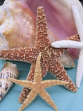Dried Sea Stars Leaning on Shell Photographic Print by Robert Marien