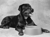 Dog Waiting at Bowl Photographic Print by Lawrence Manning