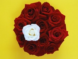 White Rose in Red Rose Bouquet Photographic Print