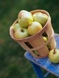 Apples in Bucket Photographic Print by Scott Speakes