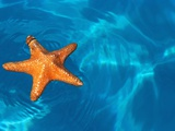 Starfish Floating on the Surface of the Ocean Photographic Print by Leslie Richard Jacobs