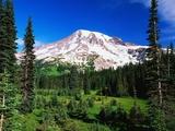 Mount Rainier mit Wald im Vordergrund Fotografie-Druck von Robert Glusic