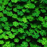 Green Clovers Photographic Print by Mark Karrass