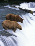 Brown Bears Fishing at Brooks Falls Fotodruck von Jeff Vanuga