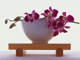 Orchidées magenta dans un vase blanc Photographie par Colin Anderson