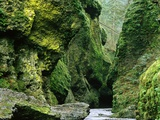 Moss Coating Oneonta Gorge Photographic Print by Jim Zuckerman