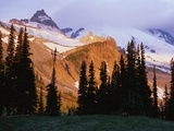 Mount Rainier and Evergreens Photographic Print