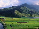 Taro Fields in Valley on Kauai Photographic Print