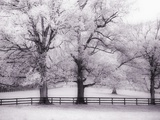 Trees and Fence in Snowy Field Photographic Print by Robert Llewellyn