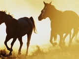 Horses Running at Sunset Photographic Print by Darrell Gulin
