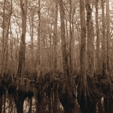 Trees in Swamp Garden Photographic Print by Brian Yarvin