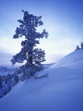 Tree on Snow Covered Hill Photographic Print by Jim Zuckerman