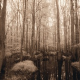 Trees Rising Above Swamp Photographic Print by Brian Yarvin
