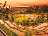 Terraces of Rice Fields Photographic Print by Bill Lai
