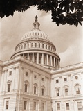 Branch Before U.S. Capitol Photographic Print by David Papazian