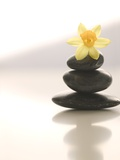 Flower Balancing on Rocks Photographic Print by Tom Grill