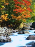 Stream and Autumn Leaves Photographic Print