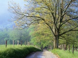 Cades Cove Lane in Great Smoky Mountains National Park Photographie par Darrell Gulin
