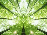 Trees in Forest Ascending Photographic Print by Robert Llewellyn