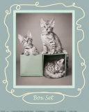 Tre gatti e una scatola Stampe di Hale, Rachael