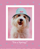 I'm a Spring Prints by Rachael Hale