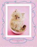 Purrfect Fit Plakat af Rachael Hale