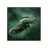 Cameleon Prints by Steve Bloom