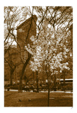 Flatiron in Spring Posters by Igor Maloratsky