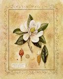 Magnolia Grandiflora, Art Print