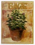 Sage Posters by Carol Elizabeth