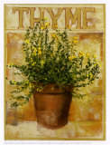 Thyme Posters by Carol Elizabeth