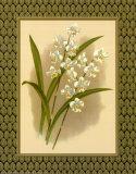 Orchidées classiquesIV Affiches par Tara Wilde