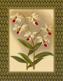 Classic Orchids I Print by Tara Wilde