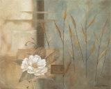 Pfingstrose vor aquamarinfarbenem Hintergrund Kunstdruck von Carol Robinson